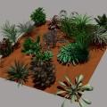 IMM Plants20