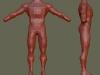 Vista frontal y lateral del cuerpo.